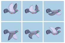 Cartoon Flying Pigeon Animatio...
