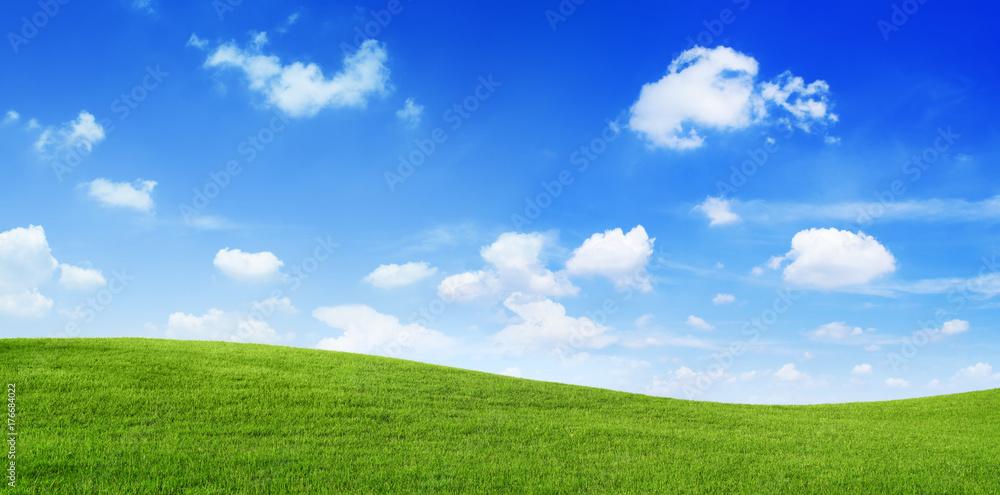 Fototapety, obrazy: Green Field and blue sky