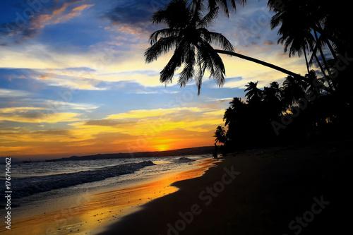 Fototapeta Silhouettes of palm trees obraz na płótnie