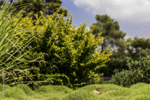 Fotografía  Blurred green and yellow bushes with purple flowers and fruit bumpy zoysia creep