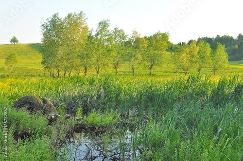 Fotografie, Tablou Krajobraz mazurski