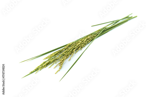 Fotografia  Thai jasmine ear rice isolated white background