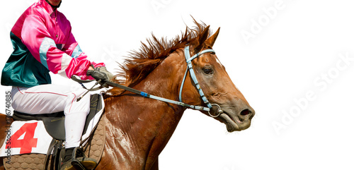 Jokey on a thoroughbred horse runs isolated on white background