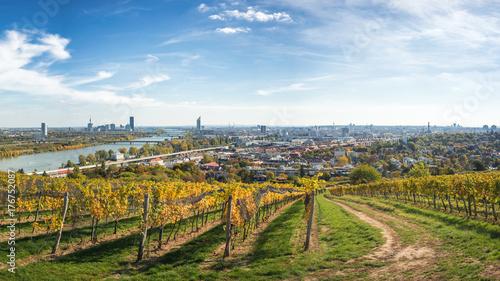 Obraz na płótnie Panorama Wiednia nad winnicami