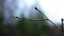 Autumn. A Spiderweb On A Tree ...