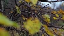 Autumn Trees After The Rain