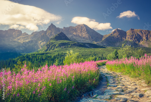 Stickers pour portes Bleu nuit Tatra mountains, Poland landscape, colorful flowers in Gasienicowa valley (Hala Gasienicowa), summer tourist trail