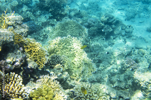 Foto op Canvas Onder water Underwater landscape with corals