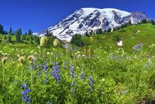 Bistort Lupine Wildflowers Par...