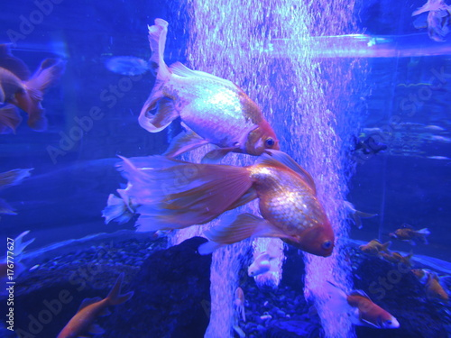 Plakat akwarium podwodne ryby tropikalne