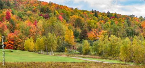 Honey a landscape trees with bright autumn fall foliage colors
