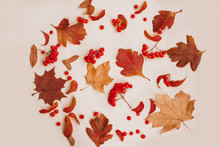 Autumn Composition Of Leaves A...