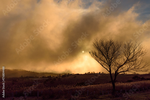 Papiers peints Corail 靄に包まれる高原