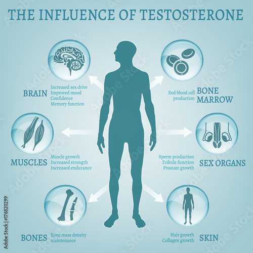 Testosterone Effects Infographics Wallpaper Mural
