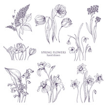 Set Of Gorgeous Botanical Drawings Of Spring Flowers - Tulip, Lilac, Narcissus, Forget-me-not, Crocus, Lily Of The Valley, Iris, Snowdrop. Blooming Plants Hand Drawn With Lines. Vector Illustration.