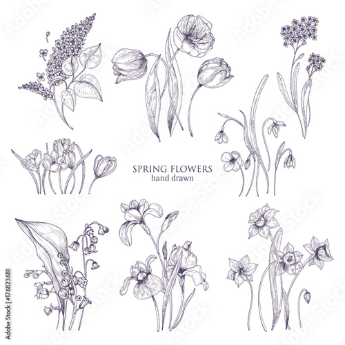 Set of gorgeous botanical drawings of spring flowers tulip lilac set of gorgeous botanical drawings of spring flowers tulip lilac narcissus forget mightylinksfo