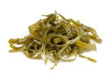 Kelp (Laminaria) Seaweed Isola...