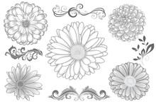 Set Of  Hand-drawing  Flower C...