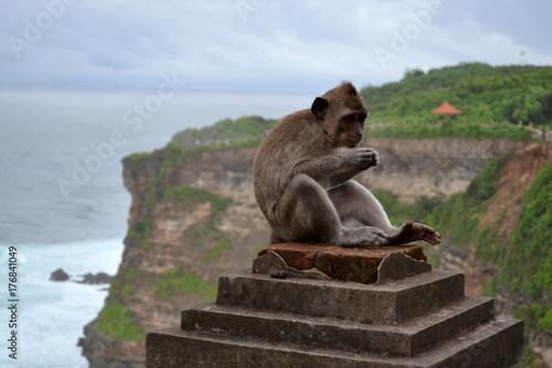 Plakat Małpa wokoło świątyni, wyspa Bali, Indonezja -