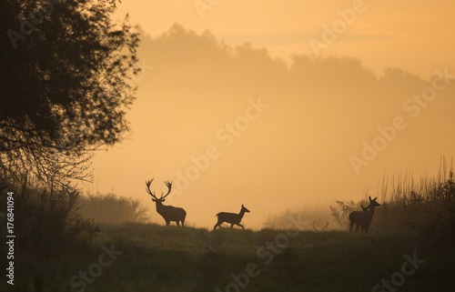 Foto auf Gartenposter Bestsellers Silhouette of red deer and hinds on meadow