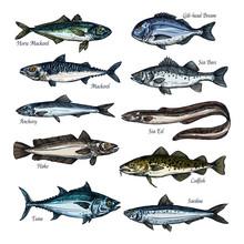 Fish, Seafood Sketch Set With Sea, Ocean Animal