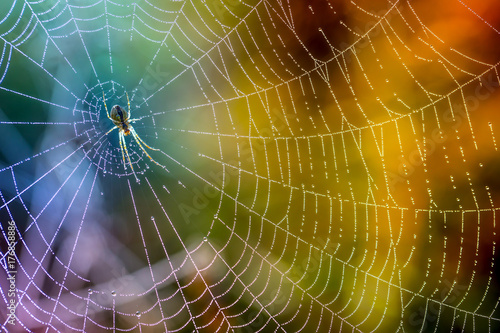 Morning drops of dew in a spider web. Cobweb in dew drops. Beautiful colors in macro nature