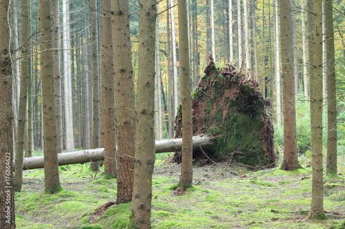 Sturmschaden © marnag
