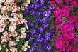 Colorful summer plants background