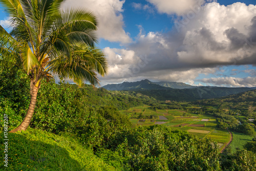 Tuinposter Bali Taro fields in beautiful Hanalei Valley Kauai, Hawaii