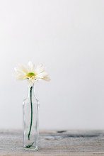 Single Daisy In A Small Old Glass Bottle, With Copyspace