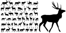 Silhouette Of Deer, Collection