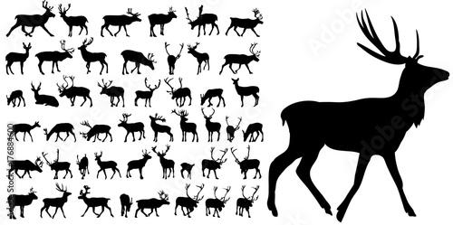 Fototapeta premium sylwetka jelenia, kolekcja