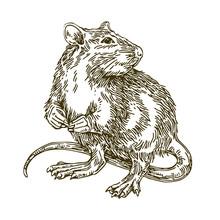 Rat. Sketch. Vector Illustration.