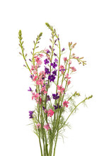 Wild Flowers Isolated