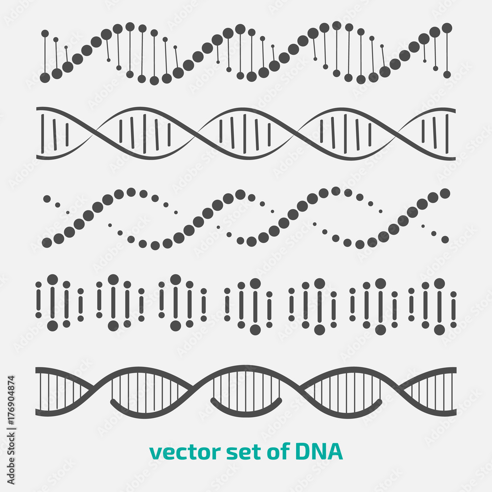 Fototapeta vector set of elements DNA.