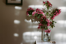 A Vase Of Pink Blossom Indoors, With Shadows.