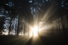 Beautiful Light Rays Shining Through Fog And Trees In A Forest