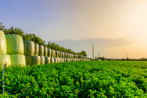 Lucerne Grass Field and stacked up bales of hay wrapped in plastic in summer at Wallpaper Mural