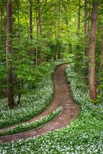 Path Through Idyllic Forest Fu...