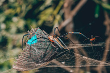 Spider With Butterfly Caught I...