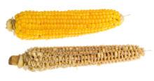 Whole And Empty Corn Cob. Maiz...