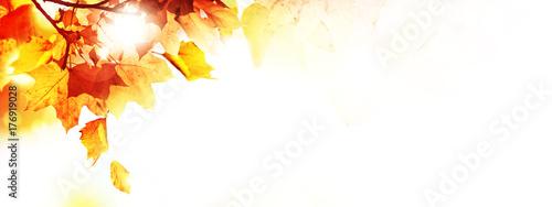 Fotografia Goldener Herbst auf weissem Hintergrund