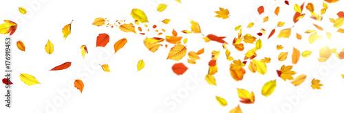 Obraz Goldener Herbst auf weissem Hintergrund - fototapety do salonu