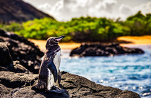 Cute Small Penguin Standing On The Rocks