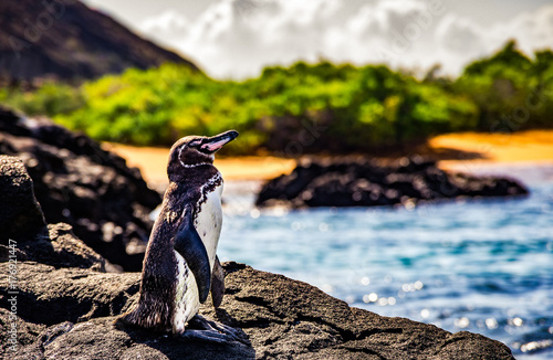Deurstickers Pinguin cute small penguin standing on the rocks