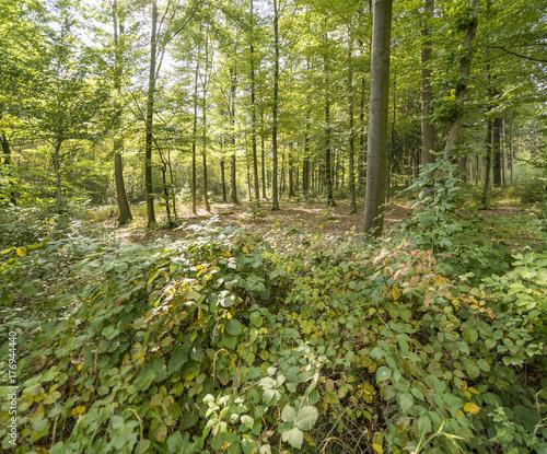 Fotobehang Bossen idyllic forest scenery