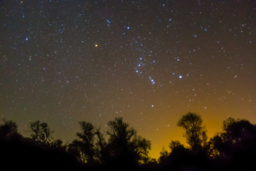 night scene, orion constellation  rising  over a night forest silhouette