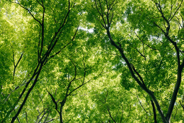 NaklejkaLow angle view of tree canopy in forest