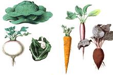 Illustration Of Vegetables On ...