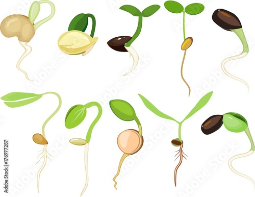 Fényképezés Set of different plant sprouts on white background